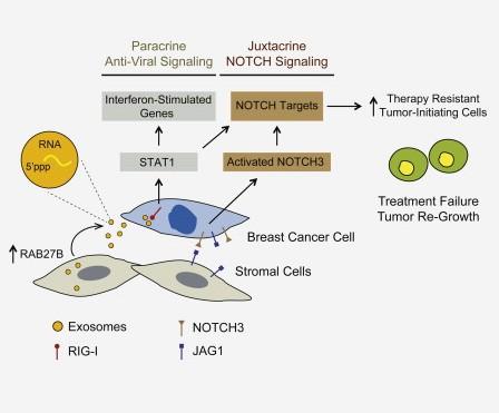 Cell:exosome从基质细胞转移到乳腺癌细胞调节其治疗的耐受性