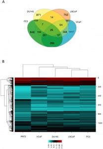 Sci Rep:前列腺癌外泌体lncRNAs富含miRNA种子区