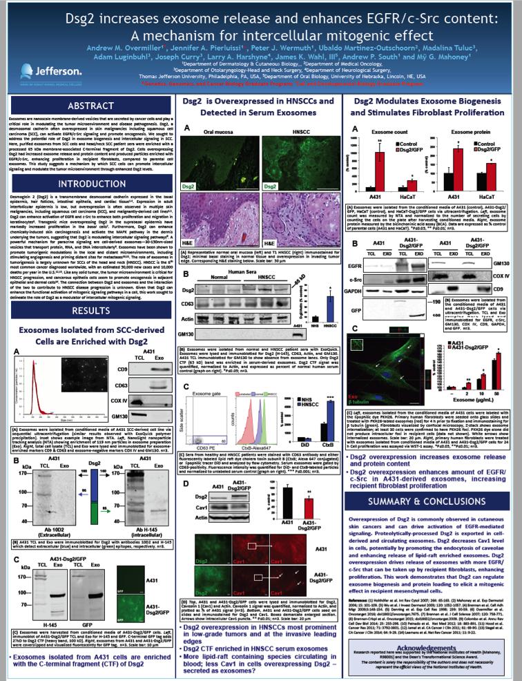 桥粒钙粘素Dsg2促进外泌体释放并提高EGFR/c-Src含量调节肿瘤微环境