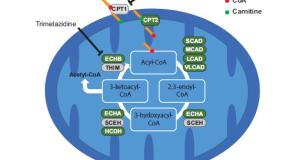 Cancer Research: 脂肪细胞释放外泌体促进黑色素瘤侵袭