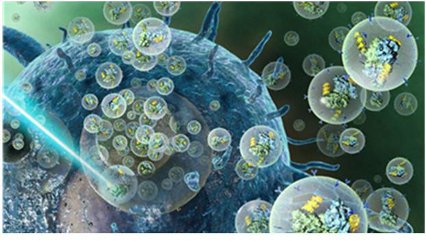 韩国研究人员开发出利用光控制外泌体输送蛋白质药物靶向肿瘤细胞的新技术