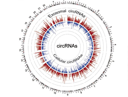 外泌体中的circRNA:KRAS突变的结直肠癌标记物