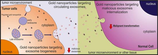 【前沿】靶向金纳米颗粒结合的外泌体的癌症治疗