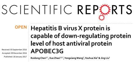 复旦大学上海医学院:外泌体参与乙肝病毒X蛋白下调宿主抗病毒蛋白APOBEC3G