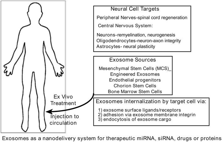 【综述】外泌体在神经退行性疾病中的治疗应用