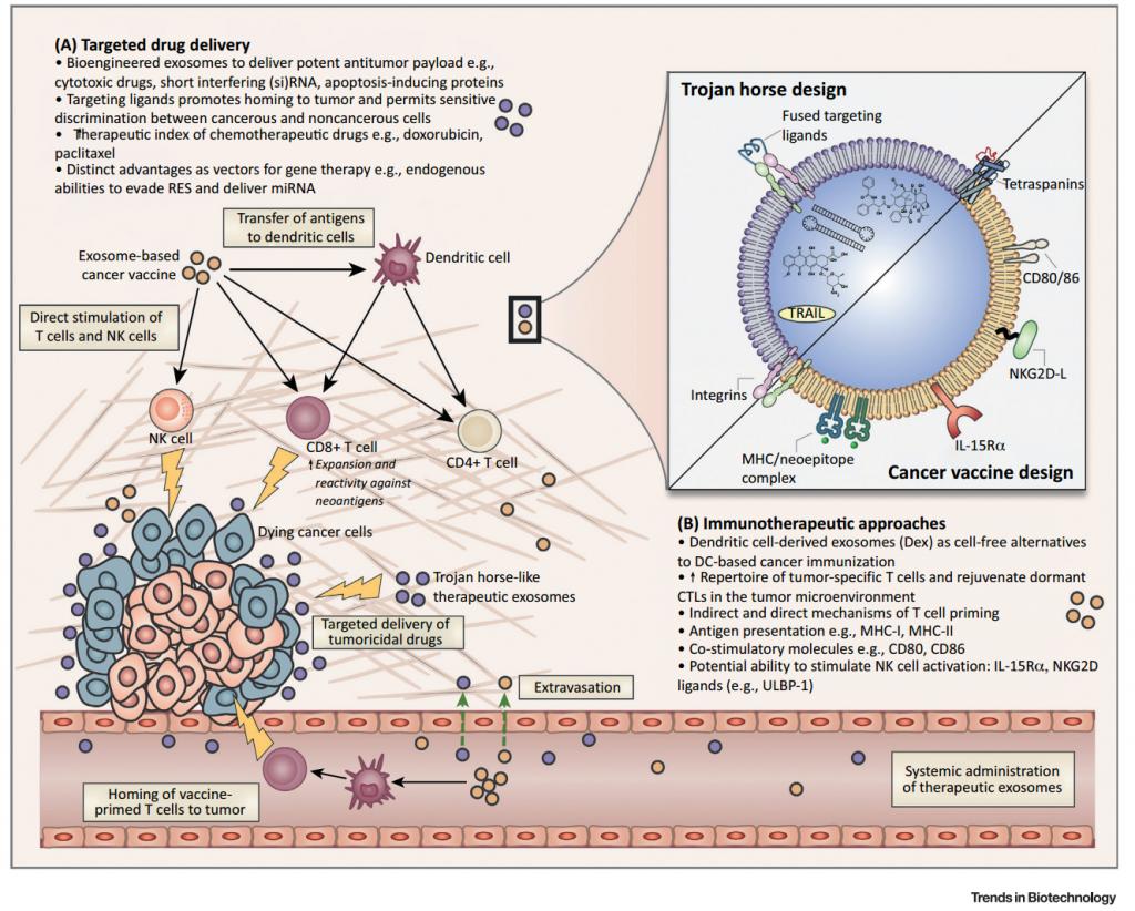 【综述】新加坡国立大学:外泌体在肿瘤纳米医药和免疫治疗上的前景与挑战