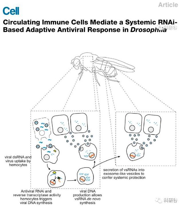 【综述速递】4篇外泌体相关的小RNA研究