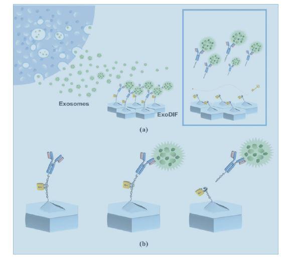 Nanoscale:一种能高纯度捕获和释放外泌体的微流体装置