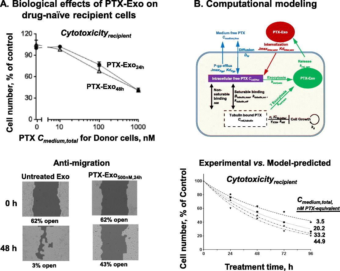 外泌体的定量药理学应用————细胞间药物传递的机制