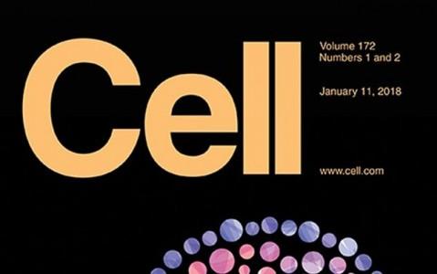 Cell杂志同期发表2篇外泌体相关文章