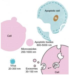 浙江大学医学院Theranostics杂志发表综述:外泌体在生物学和转化医学中的治疗诊断作用