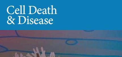 广州医科大学:梗死心肌细胞来源的外泌体加速了移植的骨髓间充质干细胞的损伤
