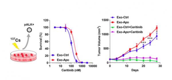 北京大学深圳医院:放疗后的非小细胞肺癌细胞的外泌体降低了ALK抑制剂治疗的药物敏感性
