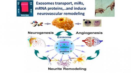 NeuroTrauma Sciences与亨利福特医疗集团宣布成立新公司以开发用于神经损伤修复的外泌体技术