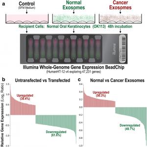 Mol Cancer:外泌体在受体细胞影响转录组重编程