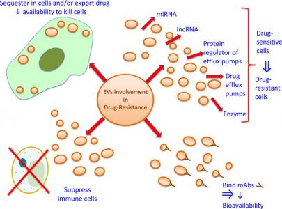 【综述】细胞外囊泡与抗肿瘤药物耐药之间的关系
