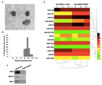 上海第十人民医院:脂肪来源干细胞分泌外泌体通过调节miRNA-132/TGF-β途径促进淋巴管生成