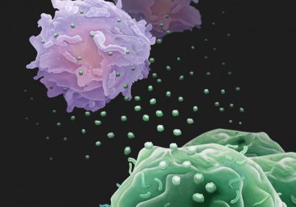 "Nature重磅!癌细胞释放PD-L1外泌体如""无人机""远程对抗免疫系统"