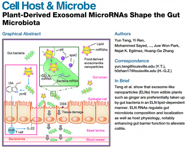 生姜外泌体miRNAs调节肠道菌群缓解肠道炎症| Cell Host & Microbe