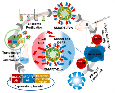 工程化改造的外泌体作为细胞免疫的纳米级控制器 | JACS