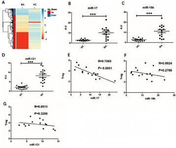 兰州大学第二医院:循环外泌体miR-17通过抑制TGFBR II表达来抑制类风湿性关节炎中Treg细胞的诱导