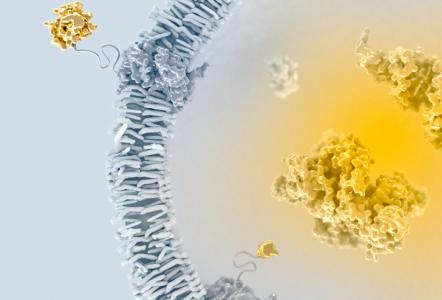 Codiak公司开发新型工程外泌体用于治疗靶向检查点难治性肿瘤