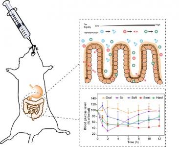 中科院上海药物所:相变温度及刚性调控脂质纳米囊泡的转运