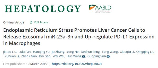 安徽医科大学:内质网应激促进肝癌细胞释放外泌体miR-23a-3p并上调巨噬细胞中PD-L1的表达