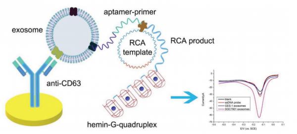 东南大学:基于Hemin / G-Quadruplex辅助信号放大系统的适体传感器用于胃癌外泌体的电化学检测