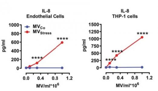 Circ Res:单核细胞分泌的微泡线粒体组分诱导内皮细胞的炎症反应
