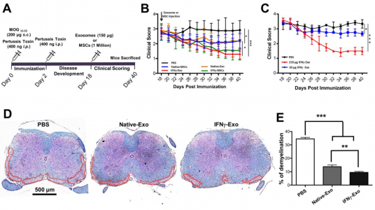 ACS Nano:干细胞外泌体作为自身免疫和神经退行性疾病的纳米治疗剂