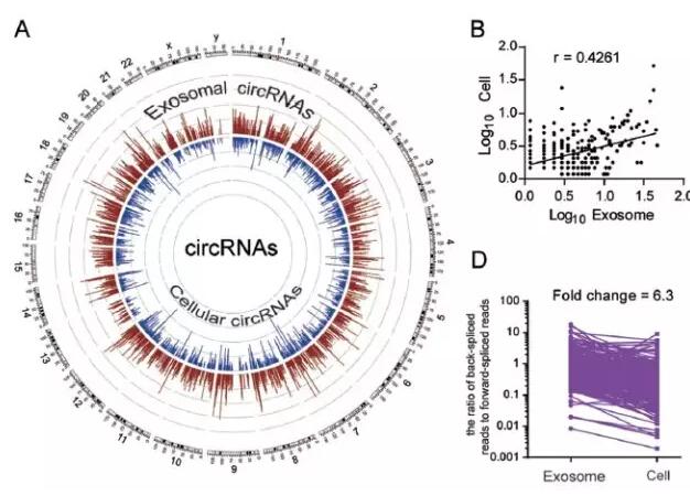 外泌体中的circular RNAs,精准医疗的大门已为你打开