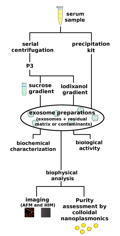 Sci Rep:不同的分离方法影响外泌体的生物活性