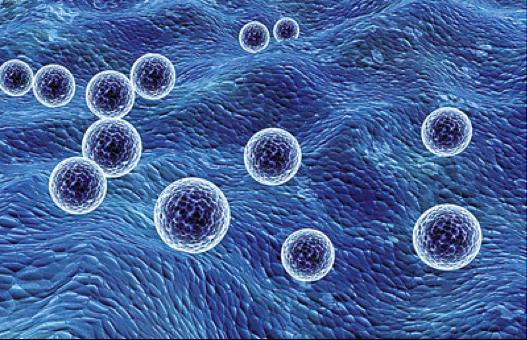 比外泌体产量高100倍的类外泌体纳米膜泡制备方法及其载体应用