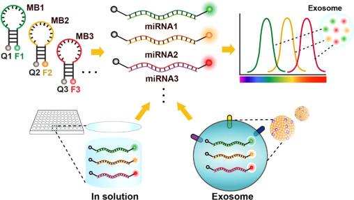 一种检测外泌体miRNA的分子探针方法