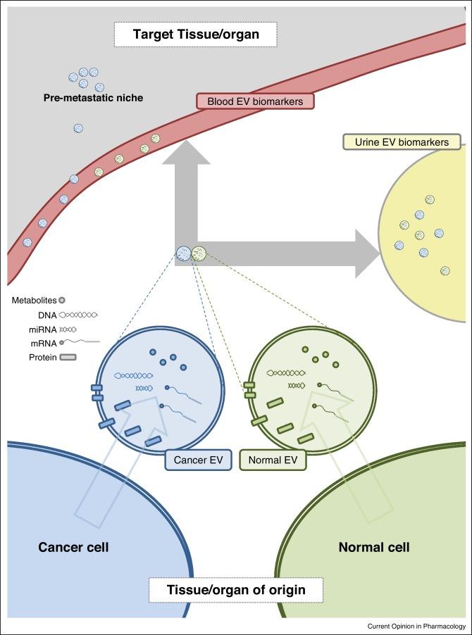 综述丨液体活检和癌症中的细胞外囊泡