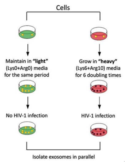 【Protocol】HIV-1感染的细胞分泌的外泌体蛋白质组学分析
