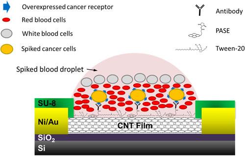 纳米管芯片捕捉和分析血液CTC和外泌体