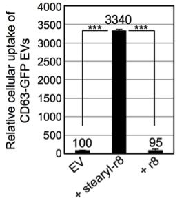【福音】诱导细胞大胞饮吸收大体积细胞外囊泡