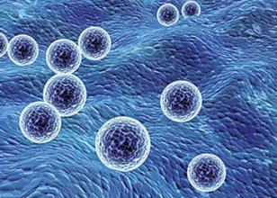 外泌体在前列腺癌中的研究进展