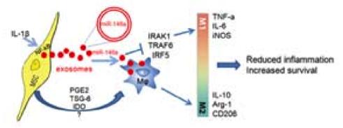 南京大学医学院侯亚义教授团队:外泌体miR-146a参与 IL-1β预处理的MSCs对败血症治疗效果的改善作用