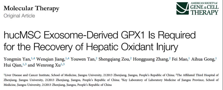 江苏大学许文荣教授、严永敏副教授团队:间充质干细胞外泌体通过GPX1减轻肝脏的氧化应激损伤