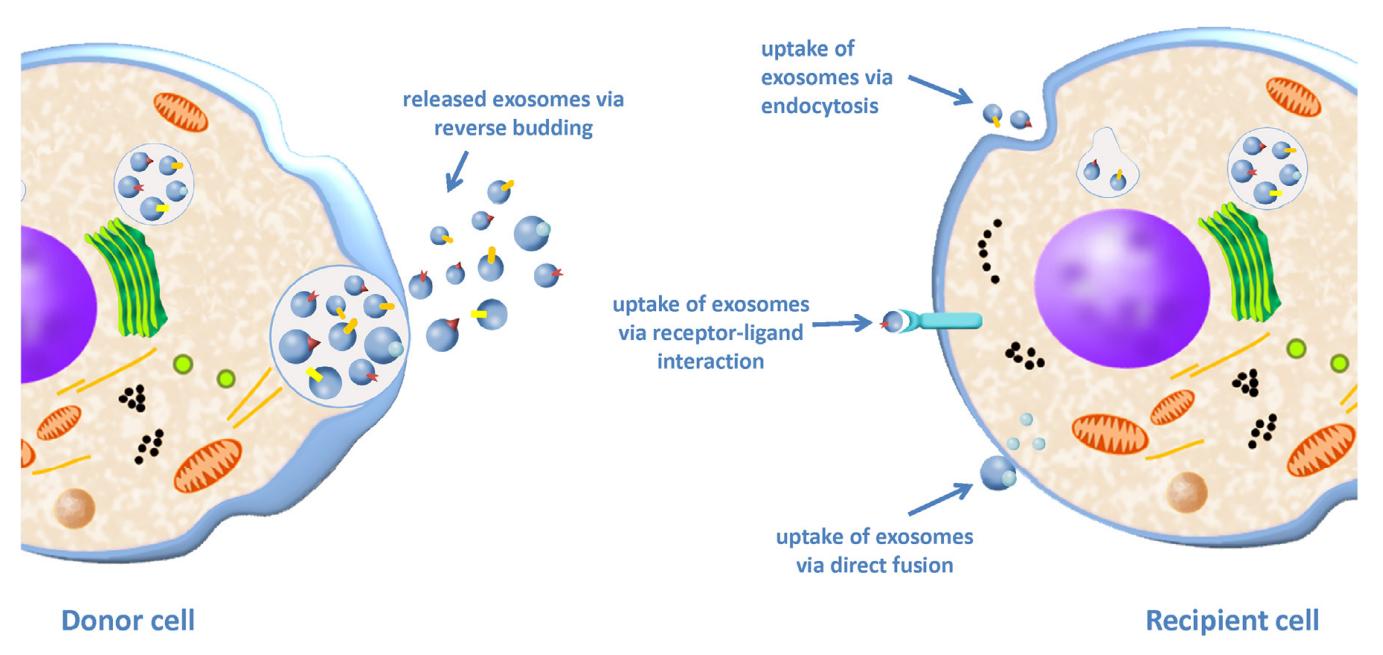 【综述】外泌体在肿瘤转移中的作用