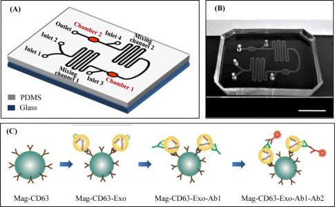 大连医科大学:一种利用微流控芯片捕获和定量外泌体的方法 可用于临床检测