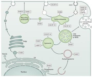 【综述】Nat Rev Microbiol:细胞外囊泡对病毒感染的影响