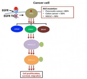 【重磅】Nature:靶向KRAS治疗胰腺癌有奇招,外泌体做先锋