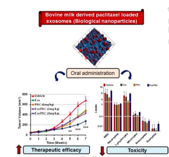 Nanomedicine:牛奶来源的外泌体包裹紫杉醇可作为口服用药