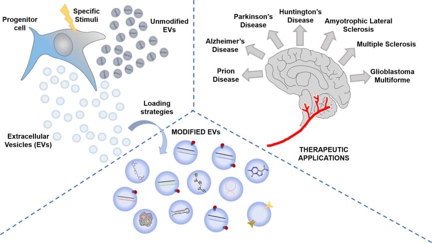 【综述】细胞外膜泡——一种新的有前景的递送系统用于治疗脑部疾病