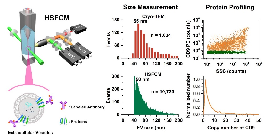 【ACS Nano】超高灵敏流式检测技术实现粒径低至40 nm细胞外囊泡的单颗粒水平多参数定量分析