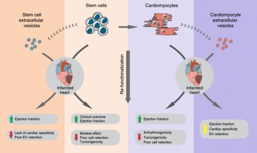 Nature子刊:iPS来源的心肌细胞分泌的胞外囊泡通过水凝胶的缓释修复心肌梗死的心脏